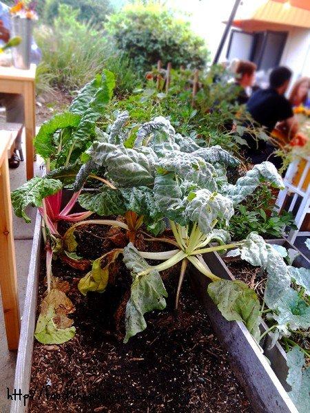 in-house-garden