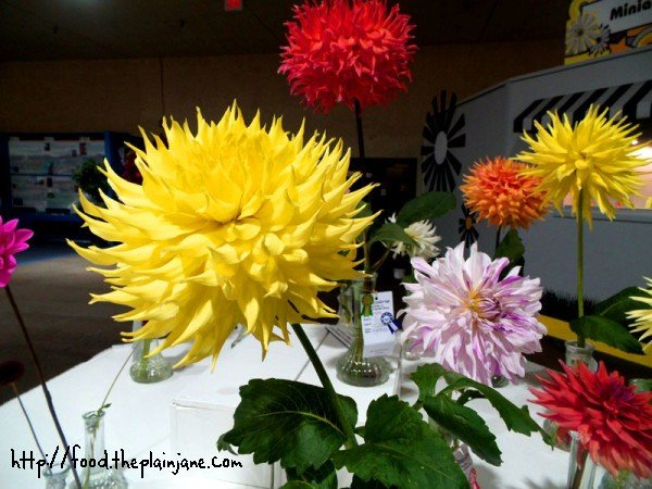 dr-suess-looking-flowers