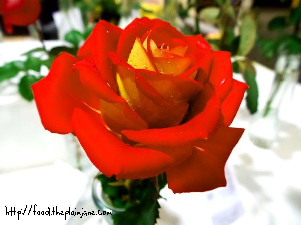 ketchup-and-mustard-rose
